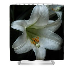 Shower Curtain featuring the photograph Assurance by Connie Handscomb