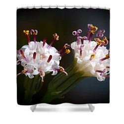 String Of Pearl Succulent Flowers Shower Curtain