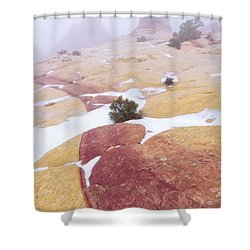 Shower Curtain featuring the photograph Stripe by Chad Dutson