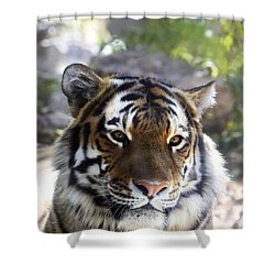 Striped Beauty Shower Curtain by Marilyn Hunt