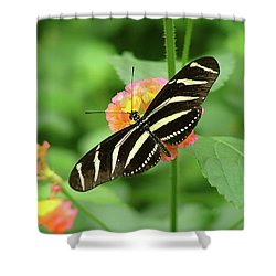 Striped Butterfly Shower Curtain by Wendy McKennon