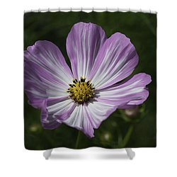 Striped Cosmos 1 Shower Curtain