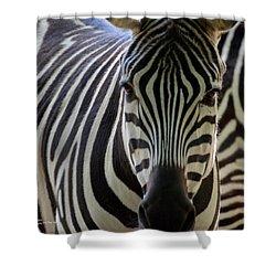 Stripes Shower Curtain by Maria Urso