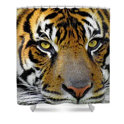 Stripes, No. 26 Shower Curtain