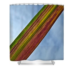 Stripes Shower Curtain by Tim Good