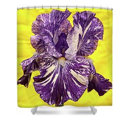 Stripped Lady Iris Shower Curtain