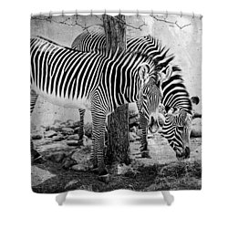 Stripped Pair Shower Curtain