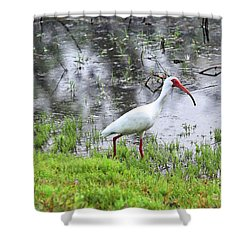 Strolling Ibis Shower Curtain by Carol Groenen