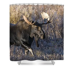 Strolling Through The Willows Shower Curtain by Sandra Bronstein