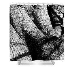 Structure Shower Curtain by Steven Macanka