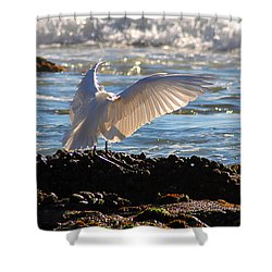 Strut Shower Curtain by Clayton Bruster