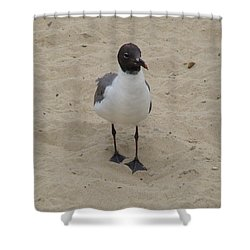 Struttin' Seagull  Shower Curtain