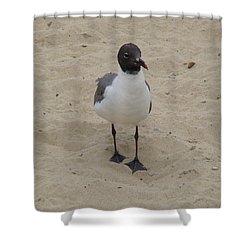 Struttin' Seagull  Shower Curtain
