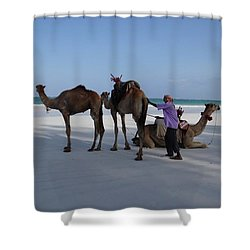 Stubborn Wedding Camels Shower Curtain
