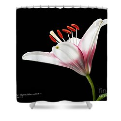 Study Of A Lily In Magenta, White, And Red #2 By Flower Photographer David Perry Lawrence And Red #1 Shower Curtain