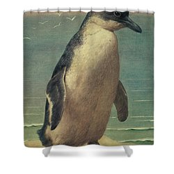 Study Of A Penguin Shower Curtain by Henry Stacey Marks