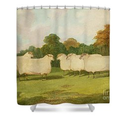 Study Of Sheep In A Landscape   Shower Curtain