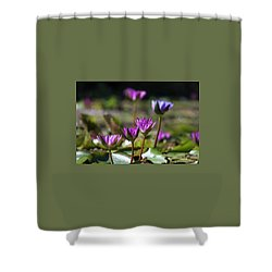 Shower Curtain featuring the photograph Stuff Of Dreams by Suzanne Gaff