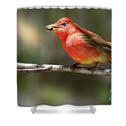 Stuffed Summer Tanager Shower Curtain