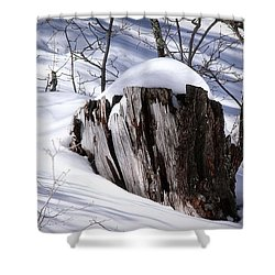 Stump Shower Curtain by Elaine Malott