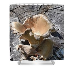 Stump Mushroom I Shower Curtain