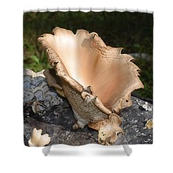 Stump Mushroom  Shower Curtain