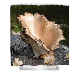 Stump Mushroom  Shower Curtain
