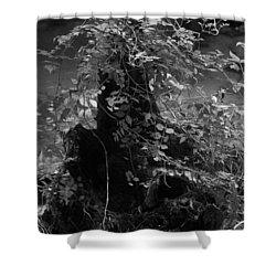 Stump Reinvented Shower Curtain