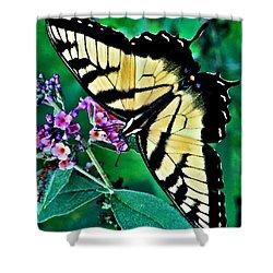 Stunning Monarch Shower Curtain