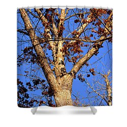 Stunning Tree Shower Curtain