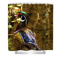 Stunning Wood Duck Shower Curtain
