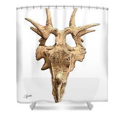 Styracosaur Skull Shower Curtain