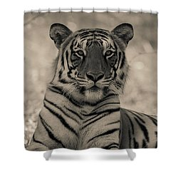 Shower Curtain featuring the photograph Suave by Ramabhadran Thirupattur