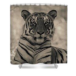 Suave Shower Curtain by Ramabhadran Thirupattur