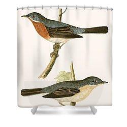 Sub Alpine Warbler Shower Curtain