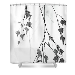 Shower Curtain featuring the photograph Subtle by Rebecca Cozart