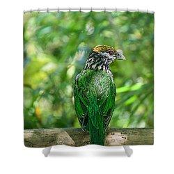 Subtropical Forest Dweller Shower Curtain