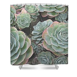 Succulent 2 Shower Curtain