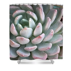Succulent Beauty Shower Curtain by Catherine Lau