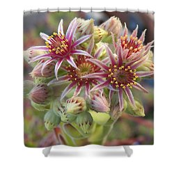 Succulent Cactus Shower Curtain by Laurie Kidd