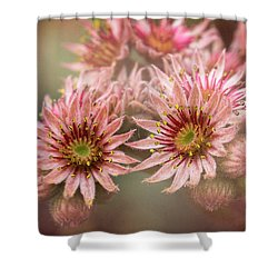 Succulent Flowers - 365-100 Shower Curtain