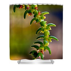 Succulent Hanging Shower Curtain