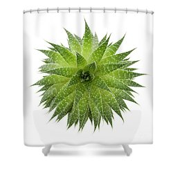Shower Curtain featuring the photograph Succulent Plant by Elena Elisseeva