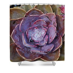 Succulent Star Shower Curtain