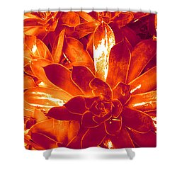 Succulents #1 Shower Curtain