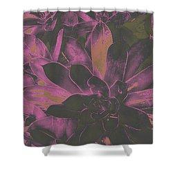 Succulents #3 Shower Curtain