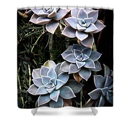 Succulents Graptopetalum Paraguayense     Shower Curtain by Catherine Lau