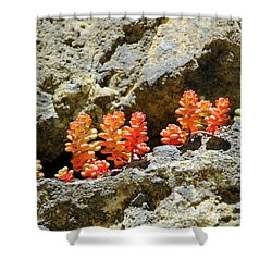 Succulents On The Oregon Coast Shower Curtain