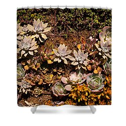 Succulents Vertical Garden Shower Curtain by Catherine Lau