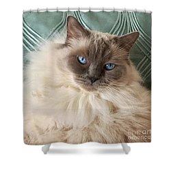 Sugar My Ragdoll Cat Shower Curtain